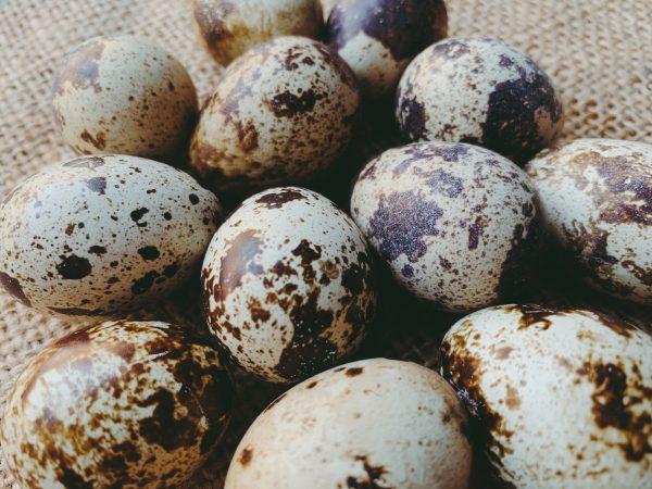 Greenham Quail Eggs 12